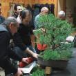 Impostazione del bonsai di Felice