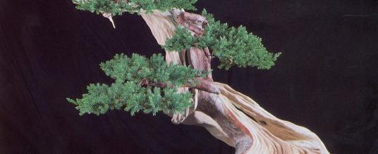 Maestri bonsai – Masahiko Kimura