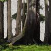 Maestri Bonsai – John Naka