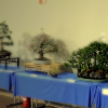 Mostra Bonsai Olate