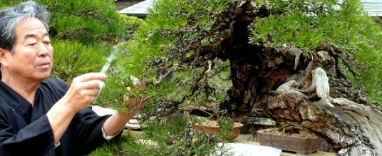 Maestri bonsai – Kunio Kobayashi