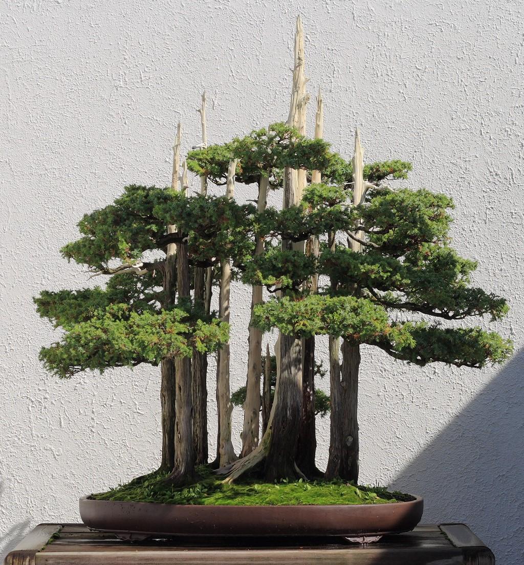 Goshin Un Prezioso Insegnamento Dal Passato Hobby Bonsai